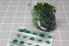 Picture of item 320-206 a Lettuce Bag 11 x 8.25 x 3.5. Clear, vented bag. PP 1 mil plain 11 X 8.25 with 3.5 bottom gusset.